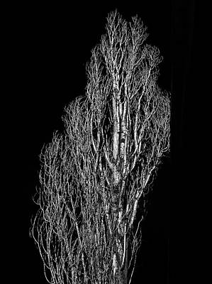 Photograph - Arbol by Valerie Rosen
