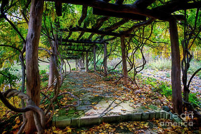Photograph - Arbor In Fall by David Arment