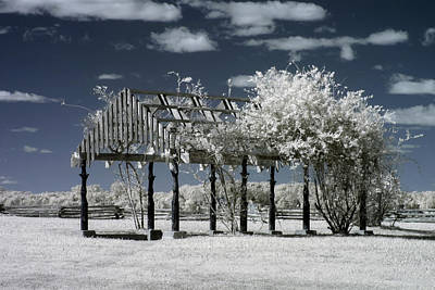 Photograph - Arbor In Petersburg National Battlefield by Liza Eckardt