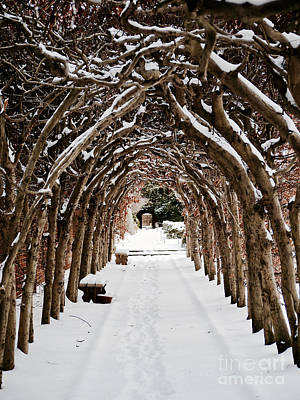 Historic Snowy Mansion Photograph - Arbor In The Snow by Rachel Morrison