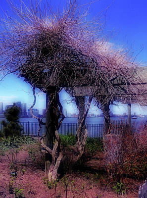 Photograph - Arbor No. 8-1 by Sandy Taylor