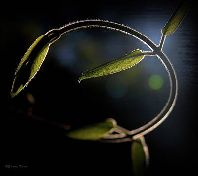 Photograph - Arbor Vine by Gerry Tetz