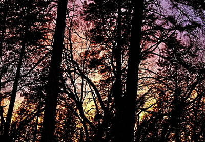 Photograph - Arboreal Blaze by Michele Myers