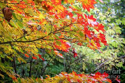Arboretum Autumn Leaves Art Print