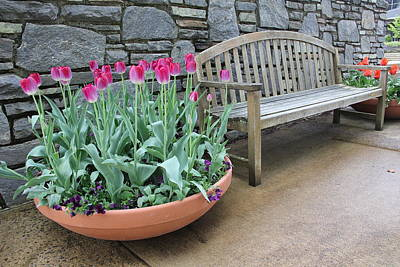 Photograph - Arboretum Bench  by Allen Nice-Webb