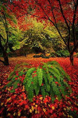 Photograph - Arboretum Primary Colors by Dan Mihai