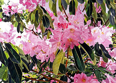 Most Commented Painting - Arboretum Rhododendrons by David Lloyd Glover