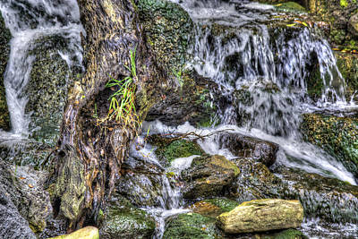 Photograph - Arboretum Waterfall by Richard J Cassato