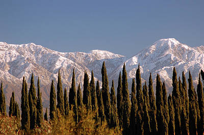 Photograph - Arborvitae And Snow Capped Mountains by James Kirkikis