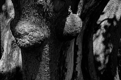 Hornby Island Photograph - Arbutus Tree Study 5 by Scott Alpen