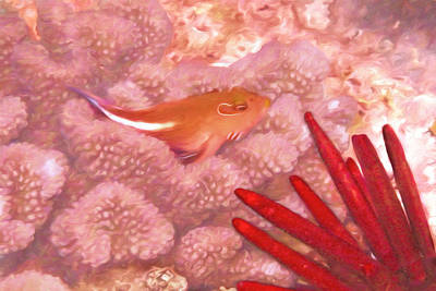 Photograph - Arc Eye Hawkfish by Susan Rissi Tregoning