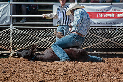 Modern Man Surf Royalty Free Images - Arcadia Championship Rodeo - Calf Tied Down in 9 Seconds Flat Royalty-Free Image by Ronald Reid