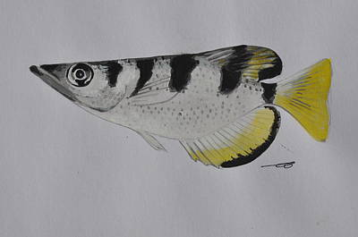 Painting - Archerfish by Eduard Meinema