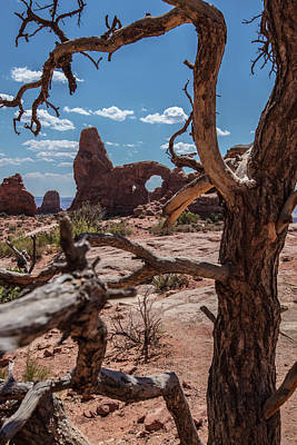 Photograph - Arches National Park Double Arch And Tree Color  by John McGraw