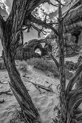Photograph - Arches National Park Double Arches And Tree by John McGraw