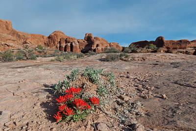 Photograph - Arches National Park Indian Paintbrush Landscape by Cascade Colors