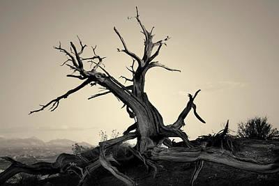 Photograph - Arches Np Vi Toned by David Gordon