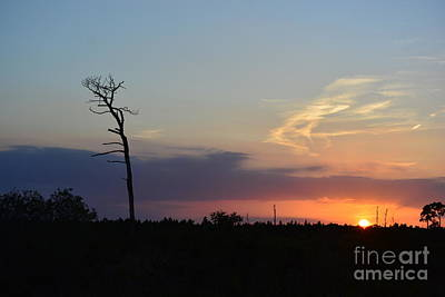 Photograph - Arching Tree At Sunset by Patricia Twardzik