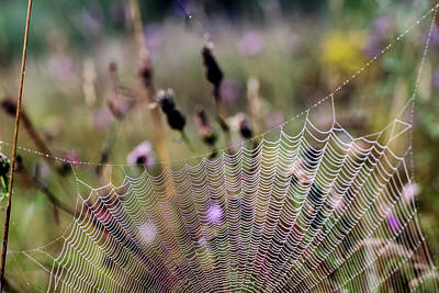 Photograph - Architecture Of A Spiderweb 2 by Christina VanGinkel