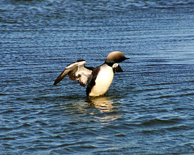 Photograph - Arctic Loon by Anthony Jones