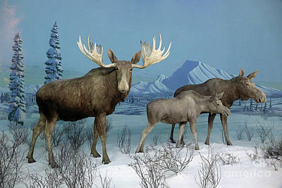 Photograph - Arctic Moose Diorama by Kevin McCarthy