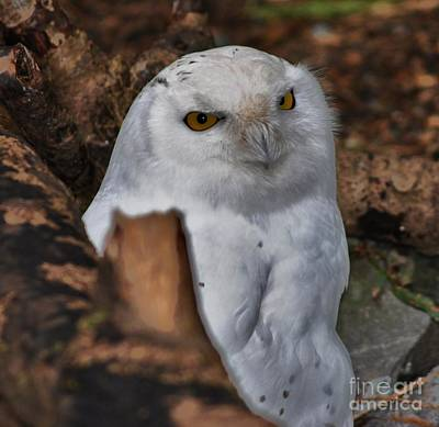 Arctic Snow Owl Art Print