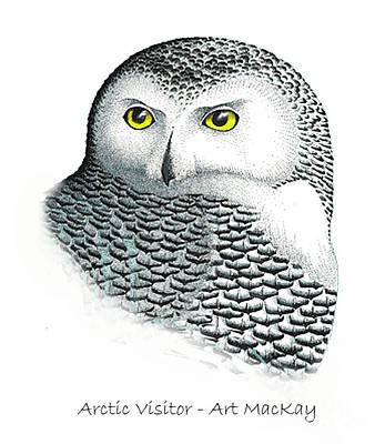 Mixed Media - Arctic Visitor by Art MacKay