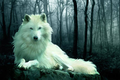 Wolves Digital Art - Arctic Wolf by Julie L Hoddinott