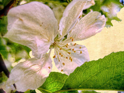 Photograph - Ardent Spring by Kathy Bassett