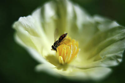 Macro Photograph - Are We Actually Into Bugs... by Bill Barowy