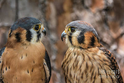Photograph - Are You Talking To Me? by John Greco