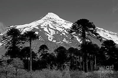 Photograph - Argentina_1-5 by Craig Lovell