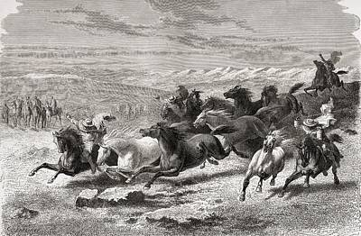 Wild Horses Drawing - Argentinian Gauchos Rounding Up Wild by Vintage Design Pics