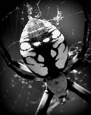 Photograph - Argiope Aurantia Up Close B-w by Kimberly-Ann Talbert
