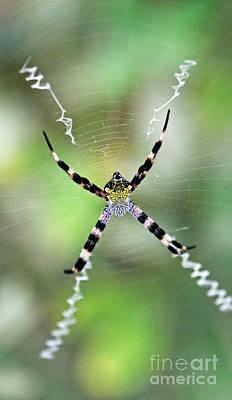 Spider Photograph - Argiope by Jennifer Robin
