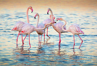 Marching Photograph - Arguing Flamingos by Inge Johnsson