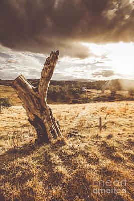 Brown Tones Photograph - Arid Tasmania Bush Landscape by Jorgo Photography - Wall Art Gallery