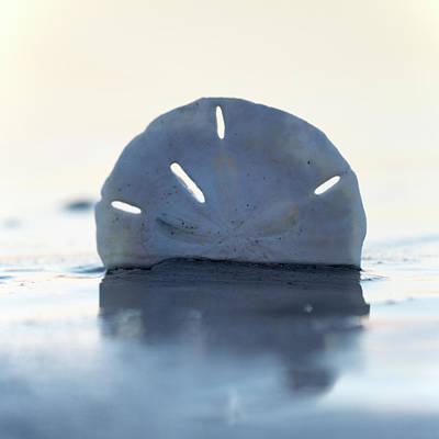 Topsail Island Photograph - Aristotle's Lantern by Betsy Knapp