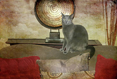 Domestic Short Hair Cat Photograph - Cat-tastic by Diana Angstadt