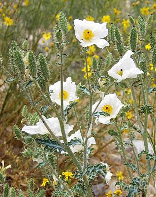 Photograph - Arizona Blooms by L Cecka