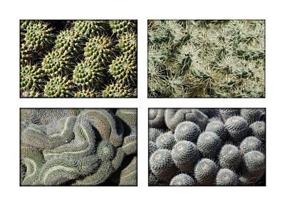 Photograph - Arizona Cacti  by Jill Reger