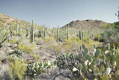 Photograph - Arizona Cactus Desert Colorful Mountain by Andrea Hazel Ihlefeld