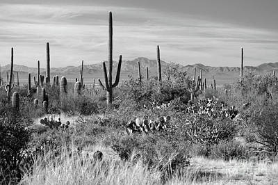 Photograph - Arizona Classic Saguaro Cactus Mountain Landscape by Andrea Hazel Ihlefeld
