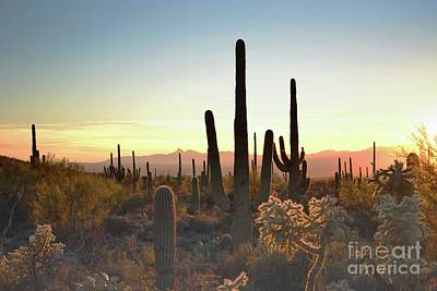 Photograph - Arizona Colorful Sunset Desert Landscape by Andrea Hazel Ihlefeld