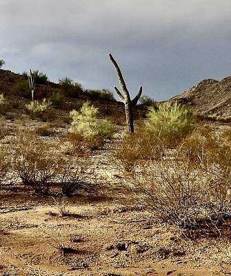 Photograph - Arizona Desert After The Storm by Judy Kennedy