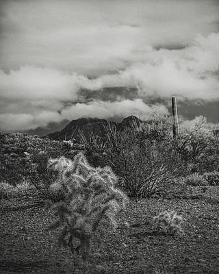 Organ Pipes Photograph - Arizona Desert B-w by Joseph Smith