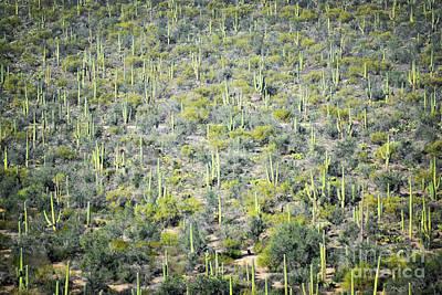 Photograph - Arizona Desert Cactus Field Landscape  by Andrea Hazel Ihlefeld