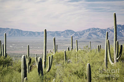 Photograph - Arizona Desert Cactus Mountains Landscape by Andrea Hazel Ihlefeld