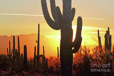Photograph - Arizona Desert Cactus Sunset Landscape by Andrea Hazel Ihlefeld