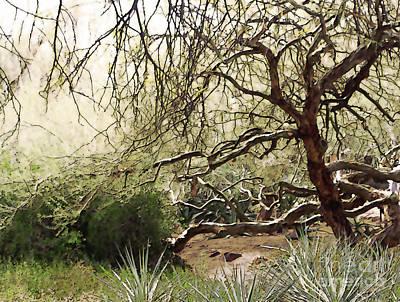 Arizona Desert Garden Art Print by Linda Parker